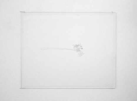 Nicolás Guagnini, Cat, 2011, Galerie Micheline Szwajcer (closed)