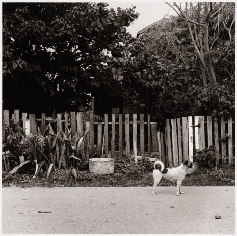 Peter Hujar, Dog in Front of Fence, Key West, ca. 1957 , Galerie Buchholz