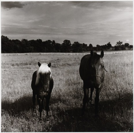 Peter Hujar, Two Horses in Field, 1977 , Galerie Buchholz