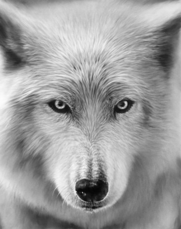 Robert Longo, Untitled (Arctic Wolf), 2019, Metro Pictures