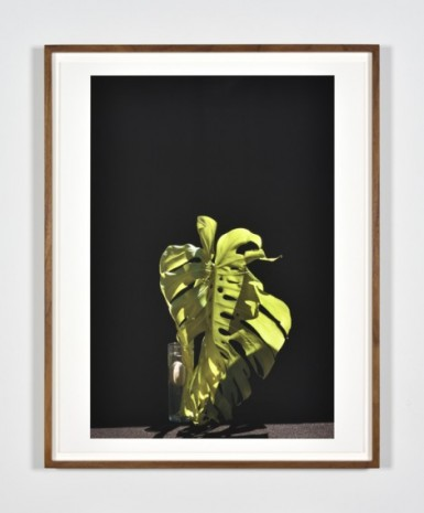 Luciano Perna, May 28, 2020, 10:09 am, Monstera Leaf II, 2020, Marian Goodman Gallery