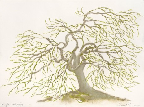 David Nash, Maple - Early spring, 2020 , Galerie Lelong & Co.