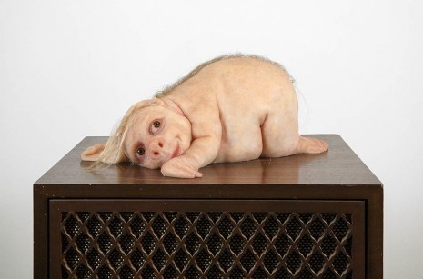 Patricia Piccinini, The Listener, 2012, Roslyn Oxley9 Gallery