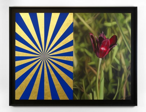 Mustafa Hulusi, Cyprus Black Tulip 3 (M) and Blue and Gold Expander (M), 2013, Max Wigram Gallery (closed)
