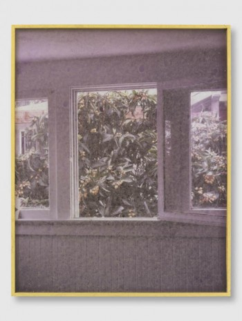 Sam Falls, Untitled (6Untitled (639 Santa Clara Avenue, 90291,Loquats, Window/Wall), 2013, Galerie Eva Presenhuber