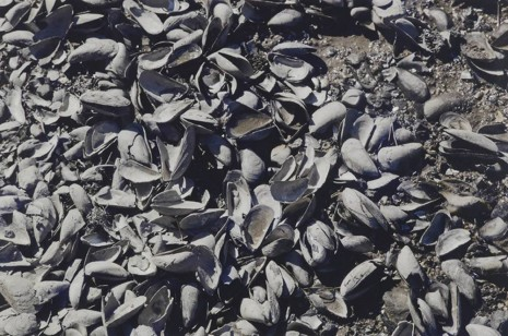 James Welling, Mussels, Broad Cove, Cushing, ME, 2012, Maureen Paley