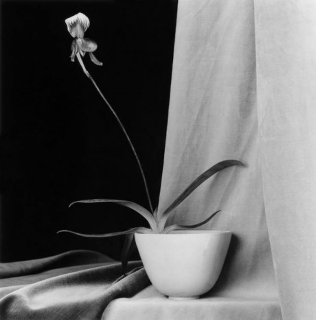 Robert Mapplethorpe, Orchid, 1986, Galerie Thaddaeus Ropac