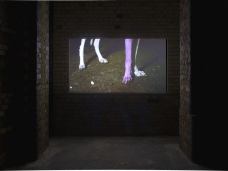 Pierre Huyghe, A way to untilled, 2012-2013, Hollybush Gardens