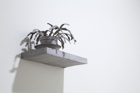 Daphne Wright, Still Life Plant, 2014, Frith Street Gallery