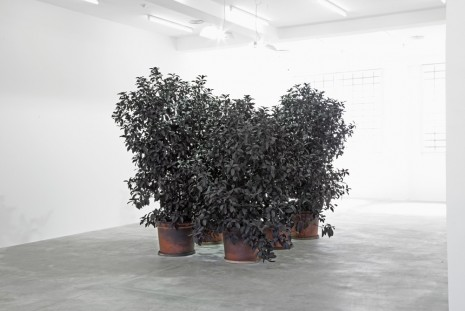 Andrew Dadson, Black Painted Plants (Viburnum Lucidum, Sept. 2013), 2013, Galleria Franco Noero