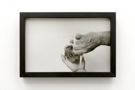 Margaret Salmon, Oyster/Hand, 2014, Office Baroque