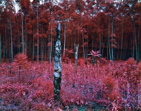 Richard Mosse, Beyond Here Lies Nothin', 2011, carlier I gebauer
