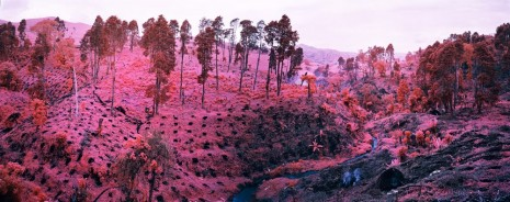 Richard Mosse, If I Ran The Zoo, 2012, carlier I gebauer