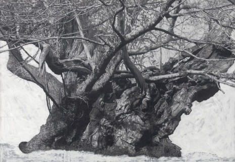 Patrick Van Caeckenbergh, Drawing of Old Trees during wintry days 2007-2014, 2007-2014, Lehmann Maupin