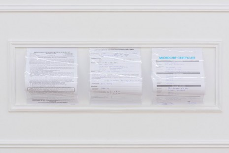Hamishi Farah, Retroactive pet passport & travel docs for unnamed canine survivor of sea venture shipwreck, 2015, monCHÉRI
