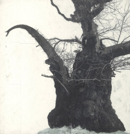 Patrick van Caeckenbergh, Drawing of old trees on wintry days during 2007-2014, 2007-2014, Zeno X Gallery
