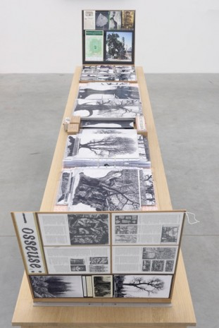 Patrick van Caeckenbergh, Inventory of the 'Drawings of Old Trees, 2014-2015, Zeno X Gallery