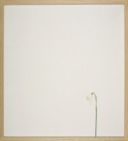 William McKeown, Open Drawing – Narrow Lane Snowdrop, 2006, Kerlin Gallery