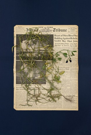 Pia Rönicke, HERALD TRIBUNE PARIS, FridayY, April 2, 1954, Lathyrus sativus, 2015, gb agency