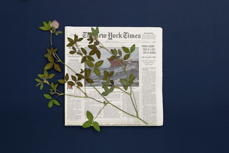 Pia Rönicke, THE NEW YORK TIMES, Sunday, July 19, 2015, Trifolium partense, 2015, gb agency