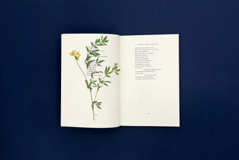 Pia Rönicke, Adonis, The Pages of Day and Night, The Marlboro Press/ Northwestern, 1994, Lathyrus pratensis, 2015, gb agency