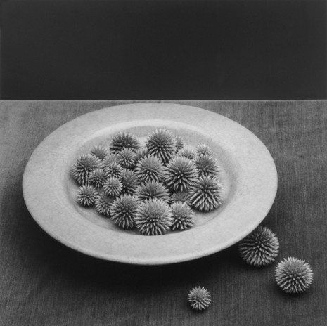 Robert Mapplethorpe, Pods, 1985, Alison Jacques Gallery