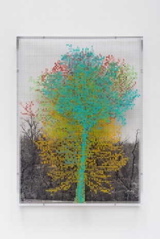 Charles Gaines, Numbers and Trees: Central Park Series III: Tree #5, Benjamin, 2016 , Galerie Max Hetzler