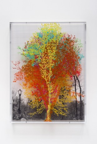 Charles Gaines, Numbers and Trees: Central Park Series III: Tree #8, Andrea, 2016, Galerie Max Hetzler