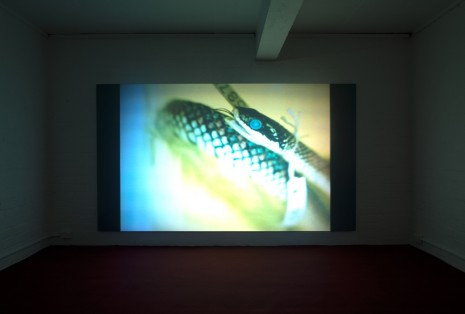 Sriwhana Spong, having-seen-snake, 2016 , Michael Lett