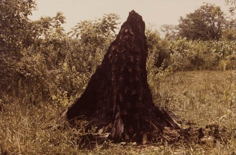 Ana Mendieta, Silueta Series (Tree of Life Series), 1978, Alison Jacques Gallery