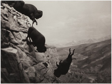 David Wojnarowicz, Untitled (Buffalos), 1988-1989 , Marian Goodman Gallery