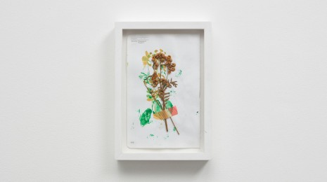 Susan Cianciolo, Botanical Drawing, 2015, Modern Art