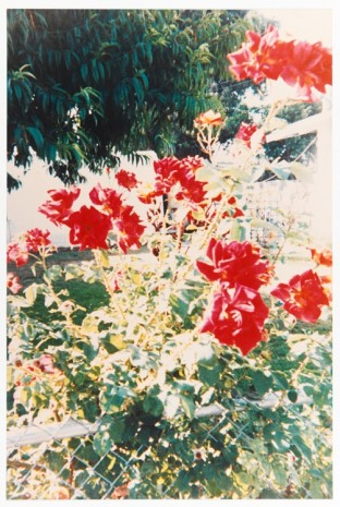 Jack Pierson, A good year (for the roses), from the series Angel Youth, 1990, Maccarone