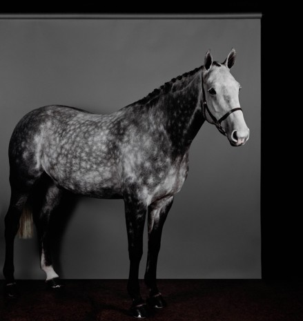 Sarah Jones, Horse (Profile) (Dapple Grey) (II), 2017/18 , Anton Kern Gallery