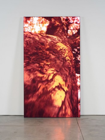 Pipilotti Rist, Untitled 2, 2009, Luhring Augustine