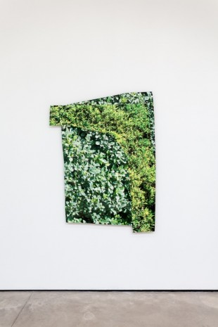 Kim Fisher, Hedge #2, 2018 , The Modern Institute