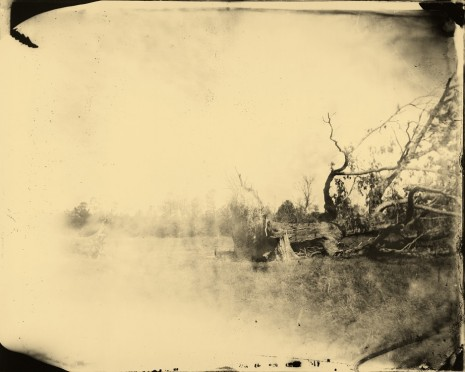 Sally Mann, Deep South, Untitled (Fallen Tree), 1998 , Gagosian