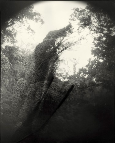 Sally Mann, Deep South, Untitled (Tree with Two Streaks), 1998 , Gagosian