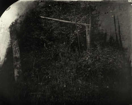 Sally Mann, Battlefields, Wilderness (Solarized Trees), 2002 , Gagosian