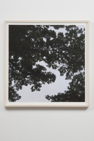 Spencer Finch, Oak Tree, Dawn (when two-dimensions become three-dimensions), 2018, James Cohan Gallery