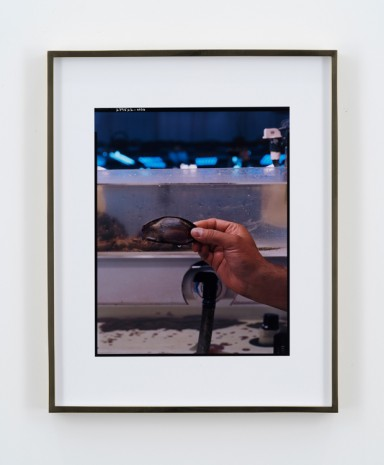 Elad Lassry, Untitled (Shark Egg), 2018 , 303 Gallery