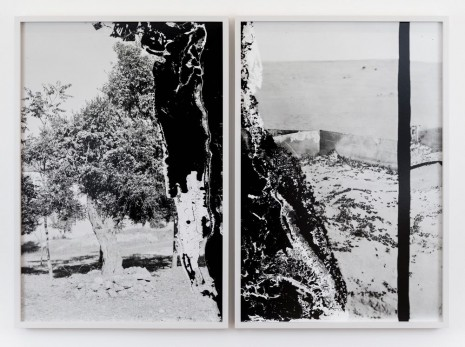 Lisa Oppenheim, Olive Tree and Wall to Stop Locusts, 1915/2019 (Diptych), 2019, The Approach
