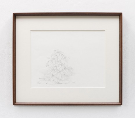 Stephen McKenna , Small plant, 1981 , Kerlin Gallery