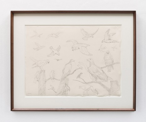 Stephen McKenna , Different species of birds, 2013 , Kerlin Gallery