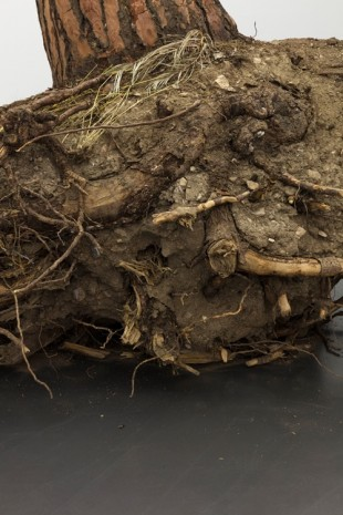 Christoph Keller, Ceppo Sradicato (uprooted tree), 2018, Esther Schipper
