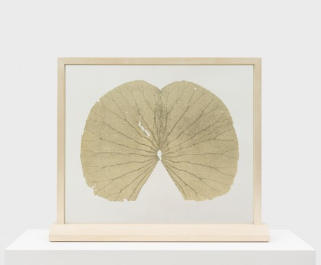 Gabriel Orozco, Lotus Leaves (Full Leaf), 2004 , Praz-Delavallade