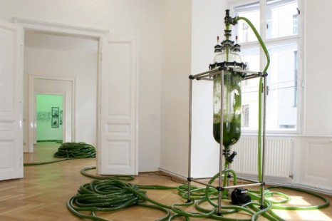 Thomas Feuerstein, Greenhouse and it's harvest, Galerie Elisabeth & Klaus Thoman